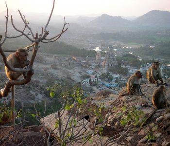 Cité de Hampi, Inde